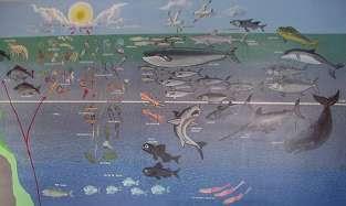 Pared del museo en donde se muestran las distintas especies marinas y la profundidad en la cual se encuentran