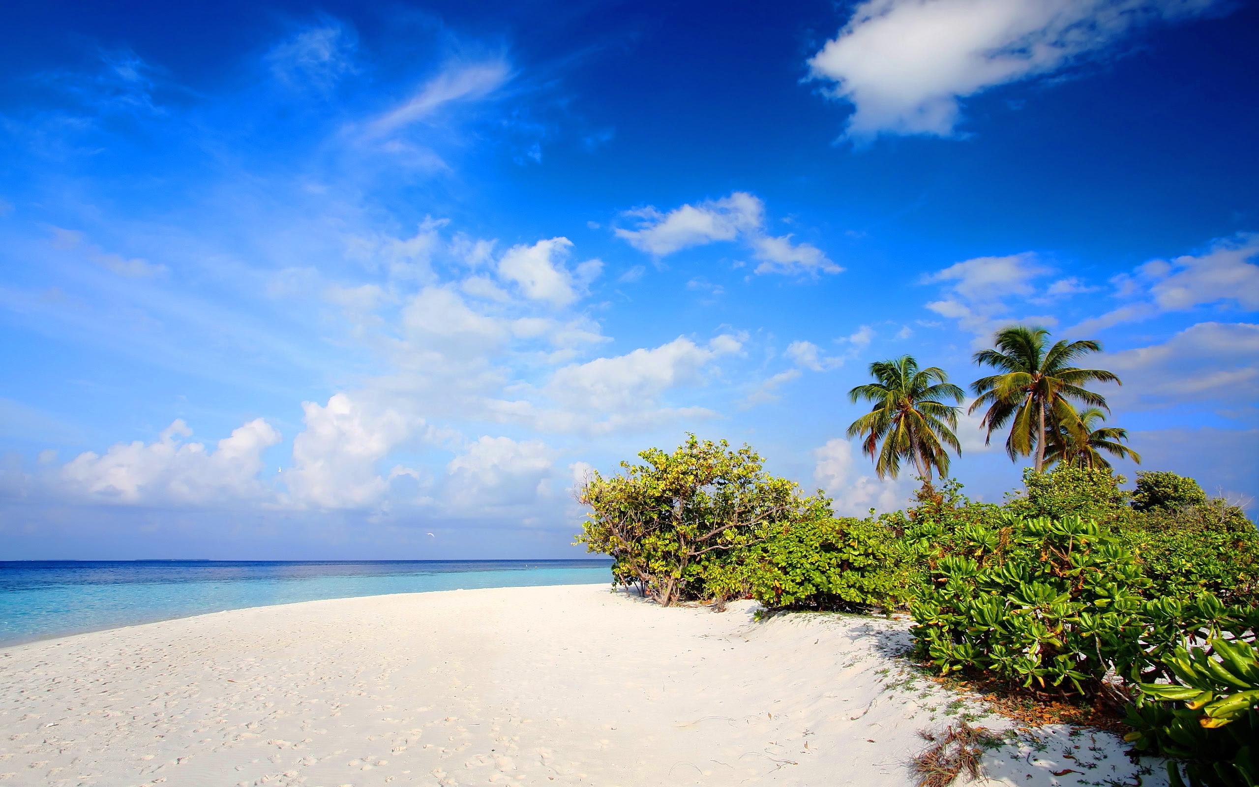 beach nature - HD Desktop Wallpapers | 4k HD