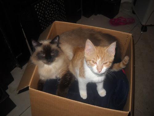 Savannah and Apollo