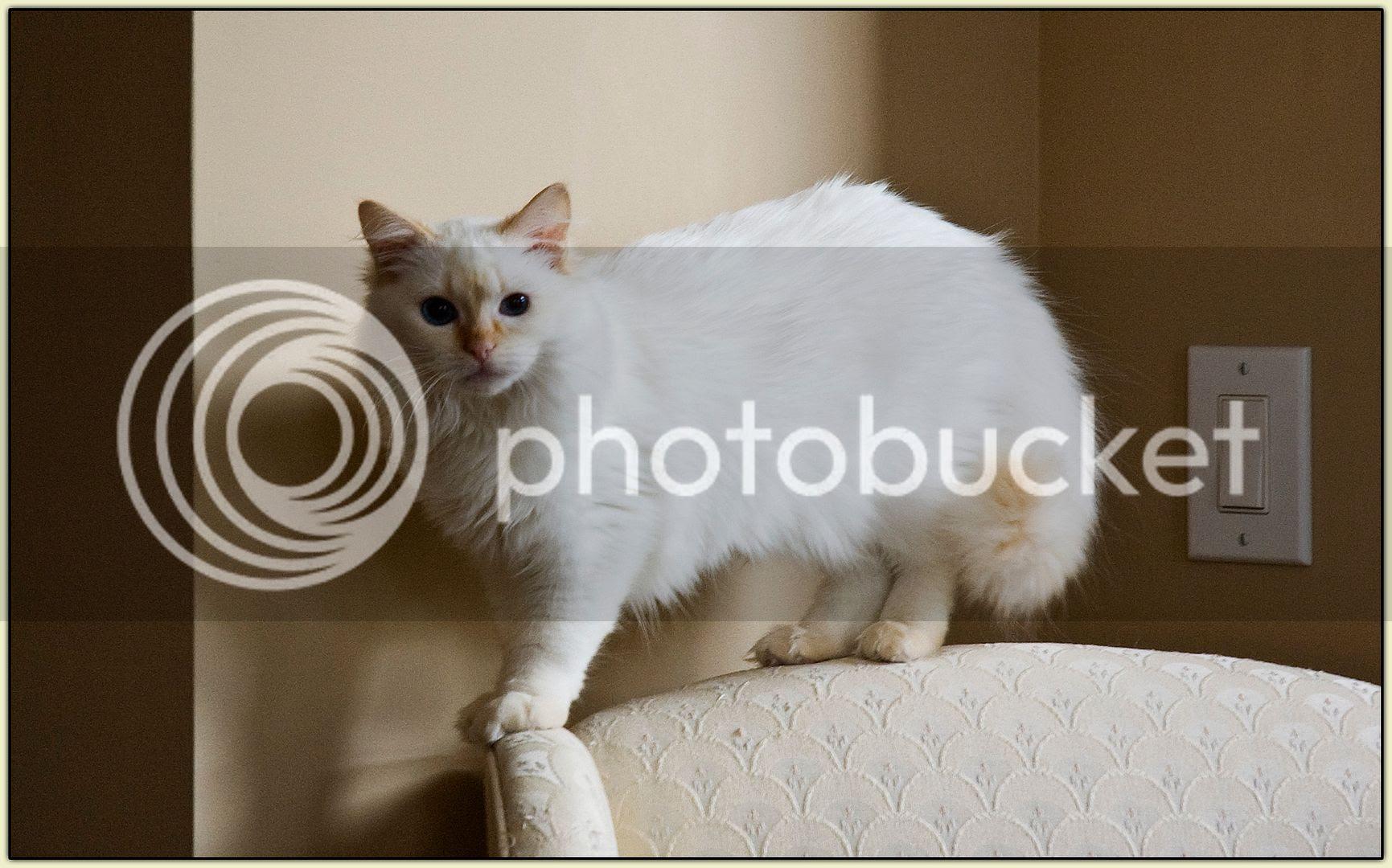 Levon atop Armchair