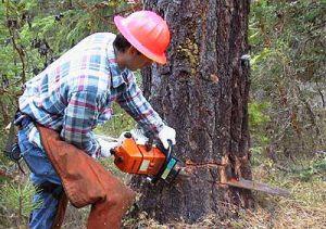 fakivágás láncfűrésszel XVI. kerület Csömöri út