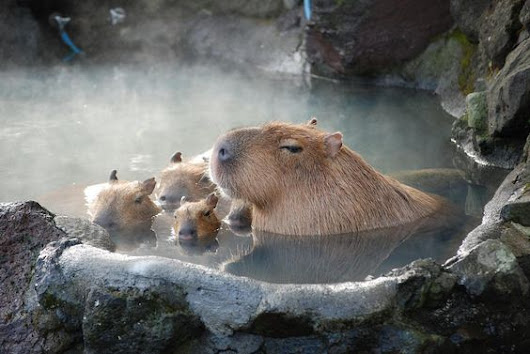 Capybaras Diet and Habitat