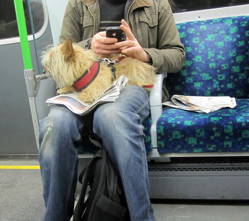 Dog on the Tube  by Annie Mole
