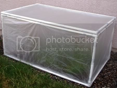 The Crafty Cattery Mini Pvc Greenhouse For My Chiltepin