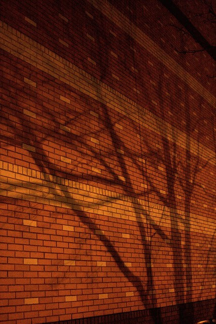 bricks, trees, shadows