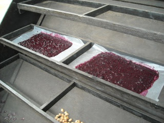Blackberry Fruit Leather on Solar Food Dryer