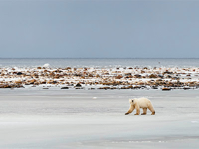 No New Offshore Oil Drilling in America's Arctic | World Wildlife Fund
