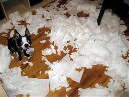 Όταν τα κατοικίδια έχουν καταστροφικές διαθέσεις (3)