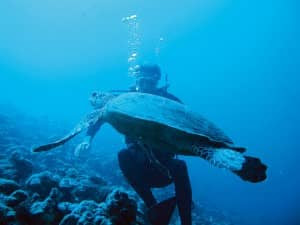 Diving with turtles at Constance Moofushi