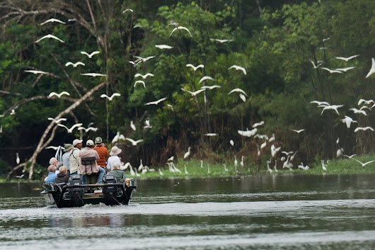 Vote - Pacaya Samiria National Reserve, Peruvian Amazon - Best Place for Wildlife Nominee:  2015 10Best Readers' Choice Travel Awards