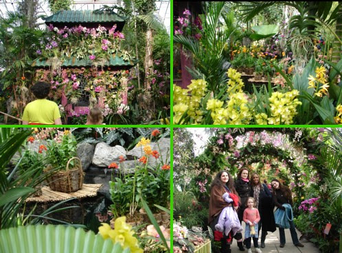 Orchid Show #4