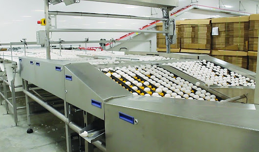 In northwestern Pa., Sperry Farms processes 4 million eggs a day - Farm and Dairy