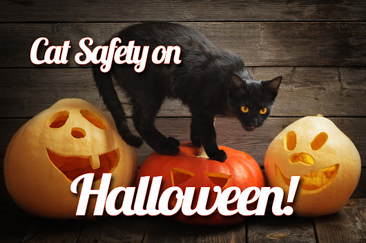 Keep Your Cat Safe on Halloween!