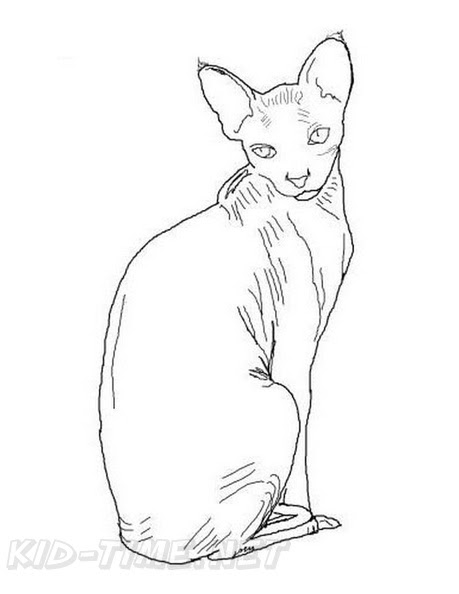 880 Hairless Cat Coloring Pages Download Free Images