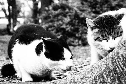 ラフモノクローム猫