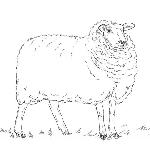 Ausmalbild Schaf Ausmalbilder Kostenlos Zum Ausdrucken
