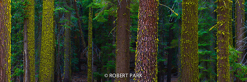"""Living Forest- Yellowstone National Park, WY"" By By Robert Park  http://www.robert-park.com by Robert Park Photography"