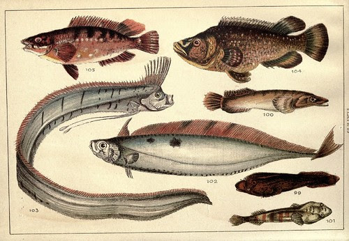 Our country's fishes and how to know them - a guide to all the fishes of Great Britain WJ Gordon 1902 d