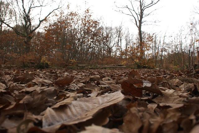DSC_5144 Autumn leaves