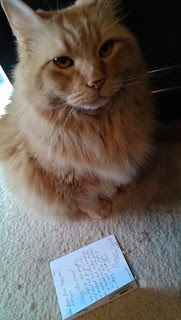 Jasper, being the elder cat, knows you read the card first