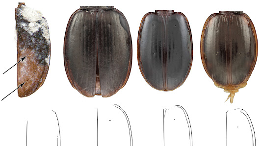 Antarctic Beetle Species Discovery Doubles As Birthday Gift To Scientists' Mentor