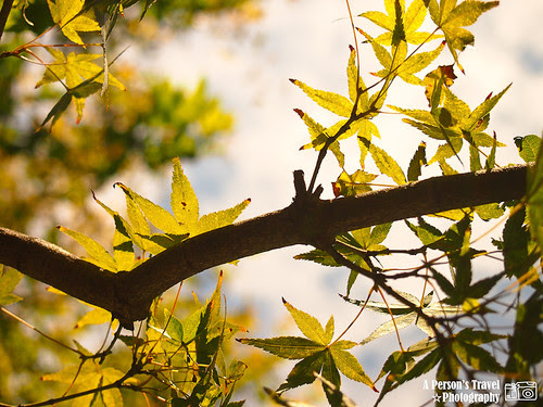 2011Kyoto_Japan_ChapFive_9