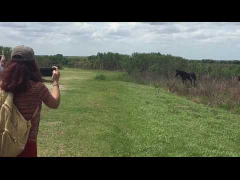 Who Do You Think Would Win Between A Horse And A Gator? You Might Be Surprised. OMG