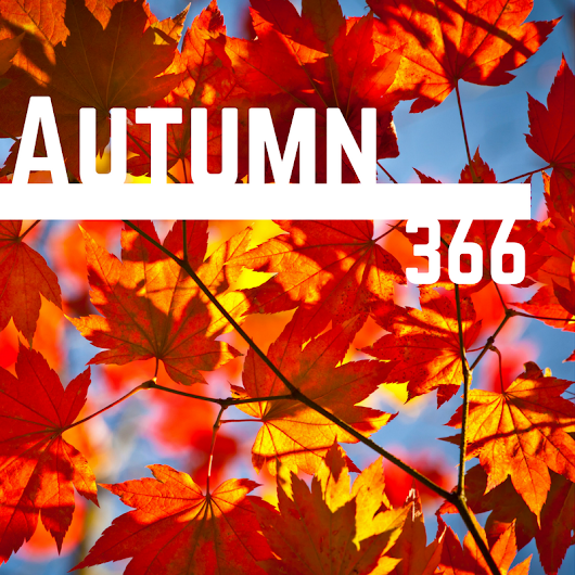 20 Questions Tuesday: 366 - Autumn