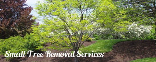 Tree Removal Services |