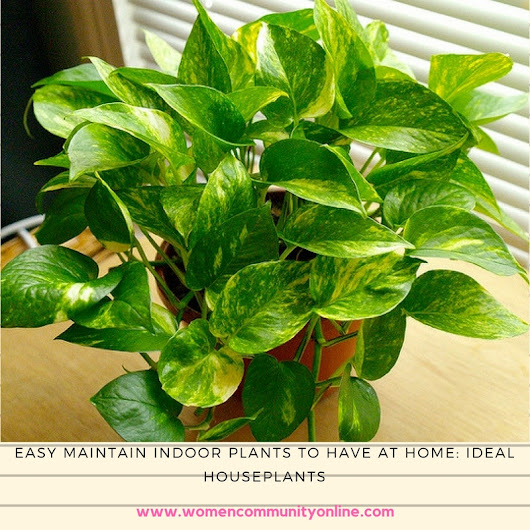 Easy Maintain Indoor Plants To Have At Home: Ideal Houseplants