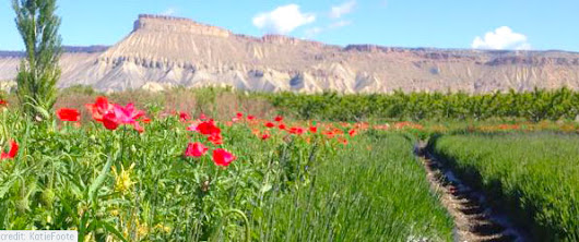 Agritourism Escape to Grand Junction and Palisade, Colorado | Girl's Getaway