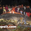 World's Largest Crocodile (which weighs one ton and is 21ft long)