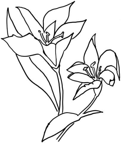 Dibujo De Lirio Para Colorear Dibujos Para Colorear Imprimir Gratis