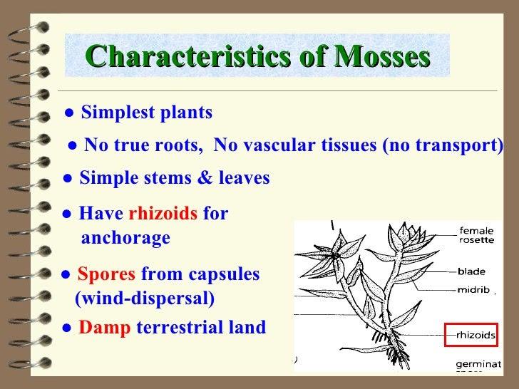 classification of plants 7 728