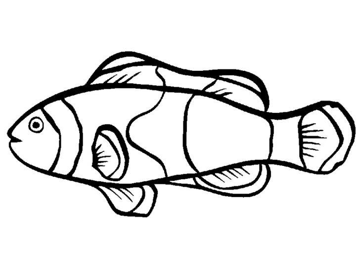 cara mewarnai gambar ikan nemo