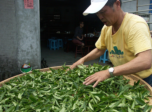 Secret of Baozhong teas from Wenshan mountains - Blog Klasek Tea