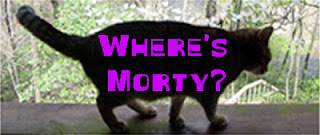 Cat photos: Where's Morty?