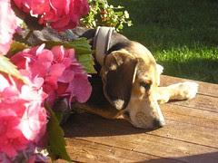 sommer, høst, 2008 078