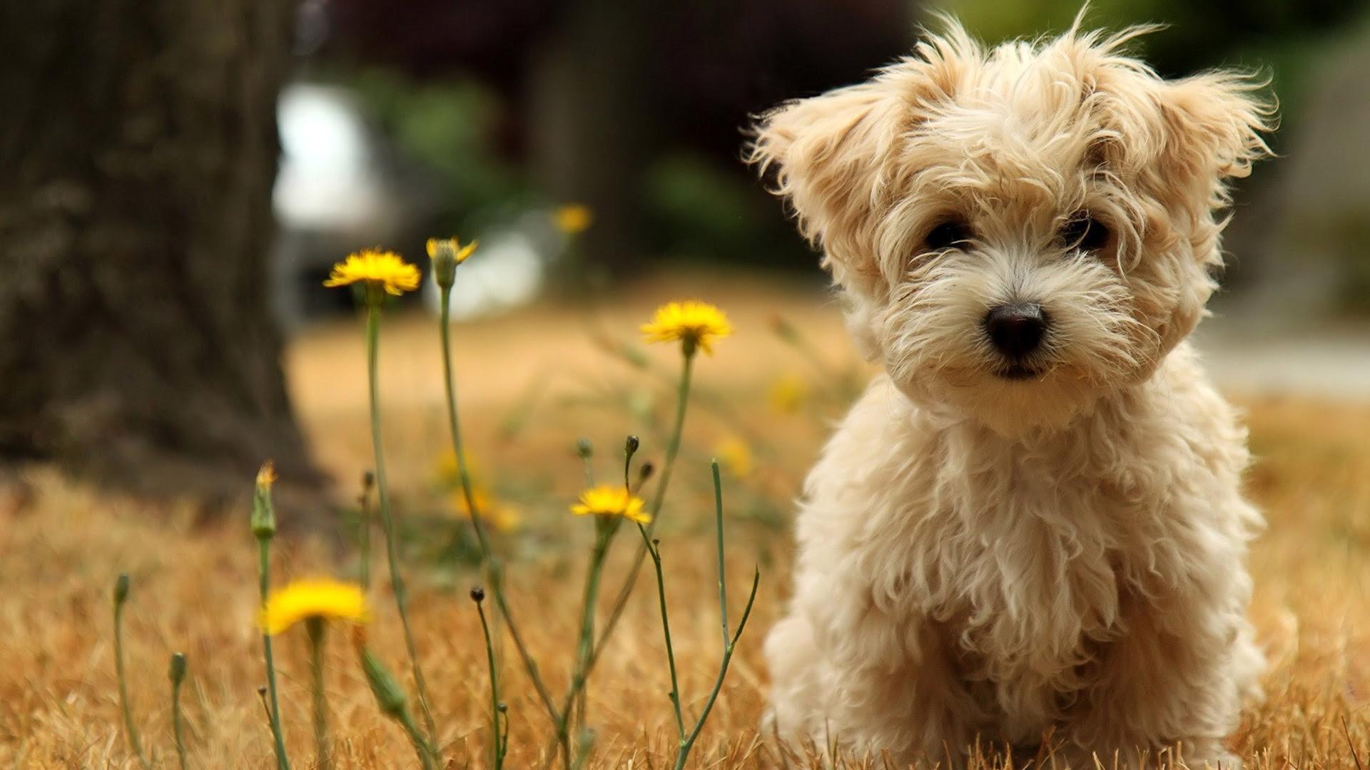 Cute Dog Wallpaper Animal Wallpaper  WallpaperLepi