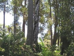 Crabapple Lane Bed and Breakfast Nannup