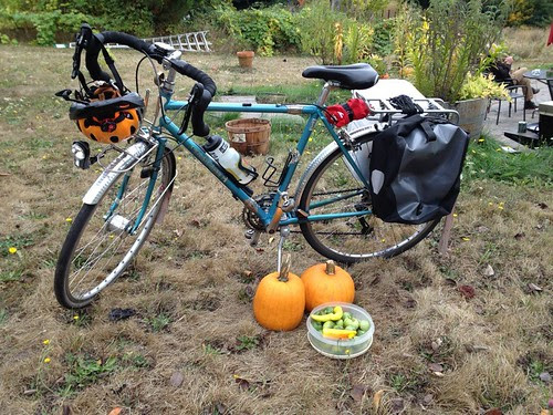 Fetching the pumpkins