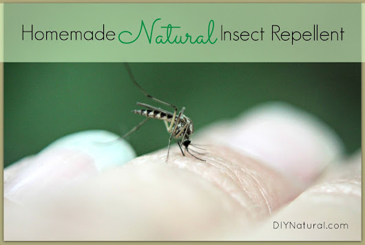 Homemade Mosquito and Insect Repellent - Keep Them Away Naturally