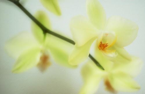 Orkidé (unnatural)