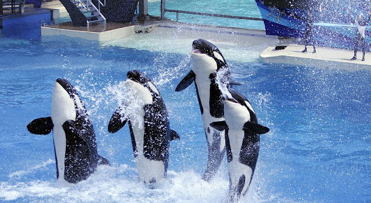 SeaWorld withdraws plans for orca tank project - Dolphin Way