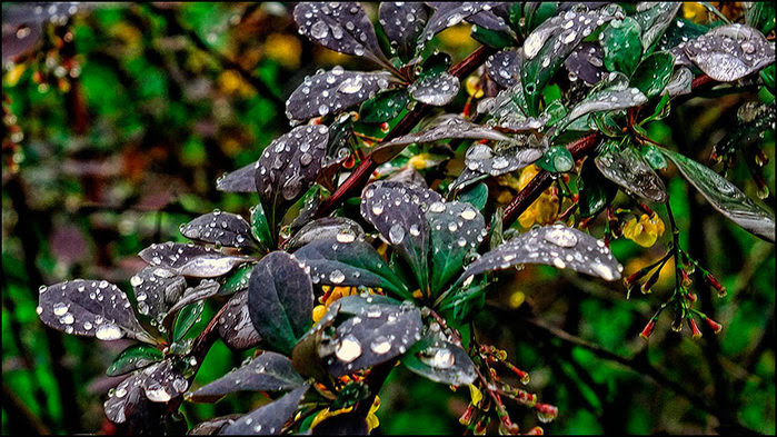Капли дождя/3673959_1 (700x393, 118Kb)
