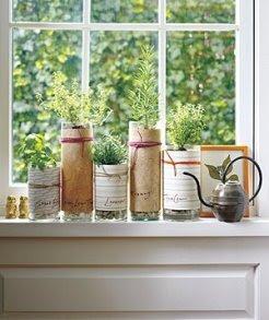Plant Herbs in Florist's Vases