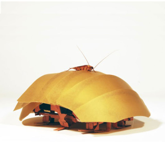 Researchers squish cockroaches in order to design a robot