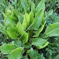 Аюрведа. Тонизирующие травы