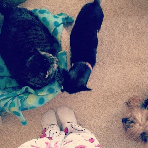 Day128 Always animals at my feet 5.8.13 #jessie365