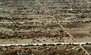 Aerial view of World s largest cattle feedlot
